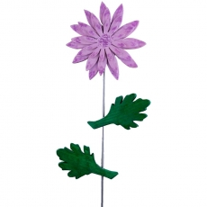 Chrysantheme flieder