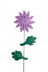 Chrysantheme rosa / lila